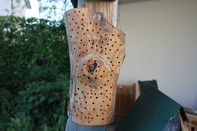 Hausgarten-20 Platz für Insekten