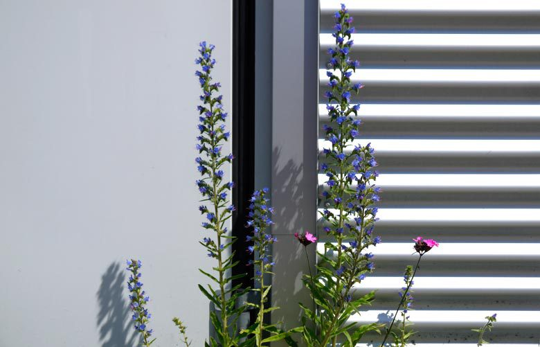 wiegel-naturgarten-firmengruen