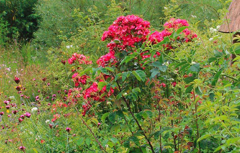 wiegel-naturgarten-private-gaerten